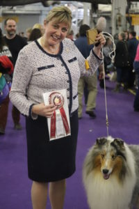 Veteran Rough Coated Collie Saxon, winning 2nd place in best of breed competition