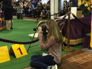 Daly Dodsworth photographing dogs showing at the Westminster Kennel Club Dog Show in New York (February 2019)